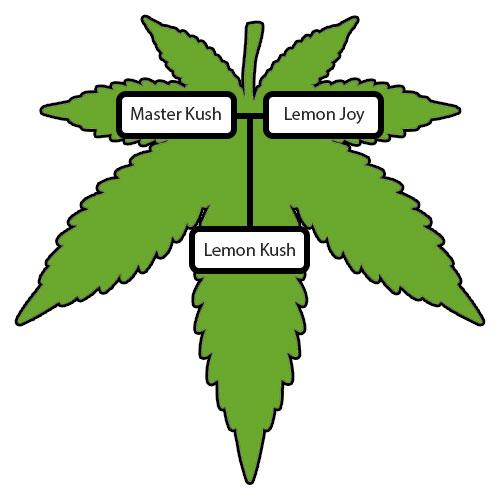 Lemon-Kush-Lineage-Tree